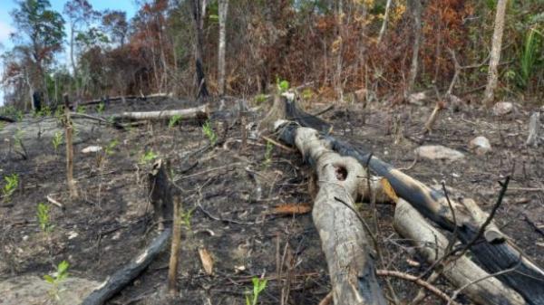 Liên tiếp xảy ra nhiều vụ phá rừng tại nhiều tỉnh Nam Trung Bộ gây bức xúc trong nhân dân. Trong ảnh: Hiện trường một vụ phá rừng ở Phú Yên (Hữu Toàn).